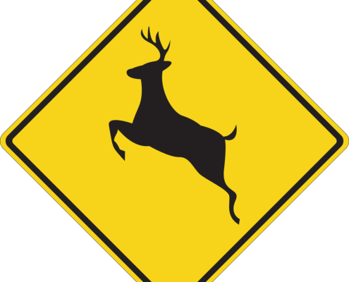 How to lower your risk for a deer collision in Pleasantville, NY